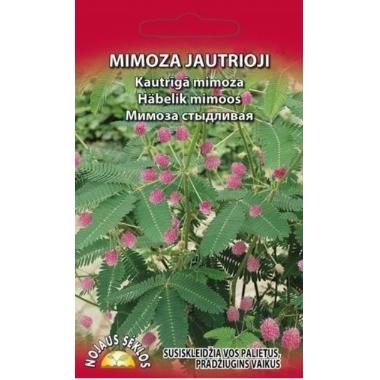 Kautrīgā mimoza, Nojaus seklos